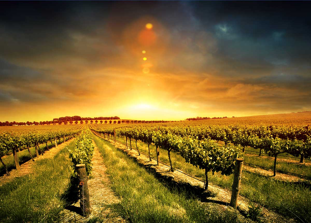 Whither the Vine? How can Wine grow in Travel Retail?